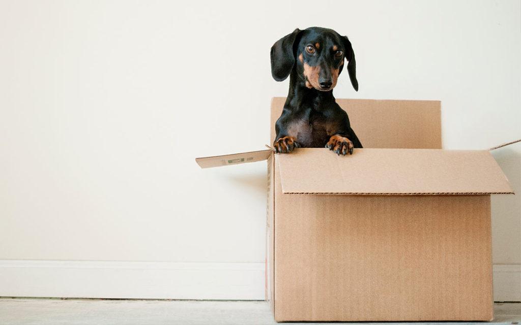 Dog peeking out of storage box